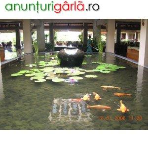 Imagine anunţ iazuri si piscine ecologice