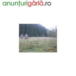 Imagine anunţ Vand teren VATRA DORNEI