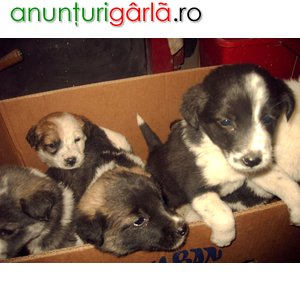download poze catelusi imagini cu catei draguti wallpapers