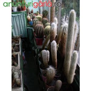 Imagine anunţ Vand colectie cactusi