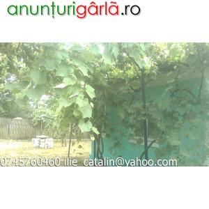 VANZARE CASA DE VACANTA SAU LOCUIT - Anunţ Imobiliare > Case din