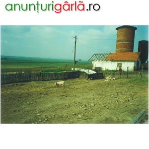 Imagine anunţ TEREN AGRICOL IN JUDETUL TELEORMAN