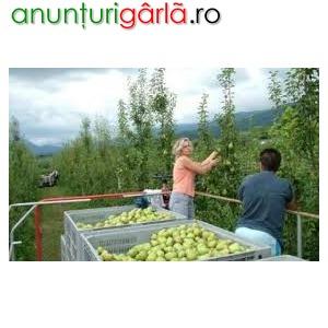 Imagine anunţ ITALIA-AGRICULTURA, GERMANIA-CONSTRUCTII