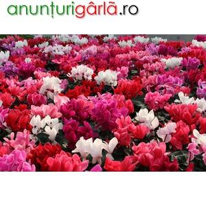 Imagine anunţ Flori de sezon