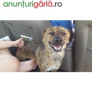 Imagine anunţ Ofer 2 cateluse 10 luni castrate unui iubitor de animale