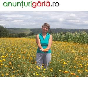 Imagine anunţ Vand samanta de galbenele, certificata, soi Germania.