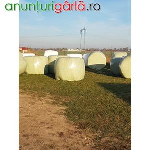 Imagine anunţ Vand baloti lucerna de 500kg infoliati-oferta