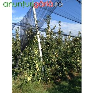 Imagine anunţ infiintam plantatii pomicole cu inalta tehnologie