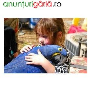 Imagine anunţ Frumos și vorbit de igienă Macaw papagali pentru Crăciun