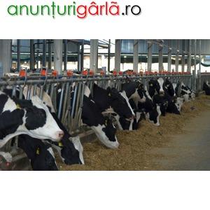 Imagine anunţ Angajator strain angajeaza femei/barbati, grupuri la ferma de vaci 1400-1600 Euro