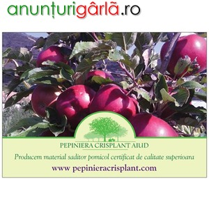 Imagine anunţ Vand pomi fructiferi