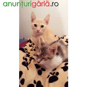 Imagine anunţ Ofer spre adoptie