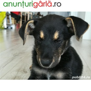 Imagine anunţ Catelusa spre adoptie