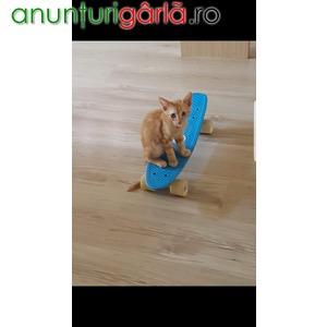 Imagine anunţ LEO pt adoptie, Bucuresti