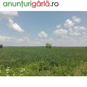Imagine anunţ Teren 1.794 mp, Domnesti, Judet Ilfov
