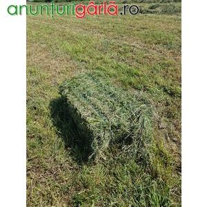 Imagine anunţ Schimb baloti de lucerna cu animale de ferma sau utilaje agricole