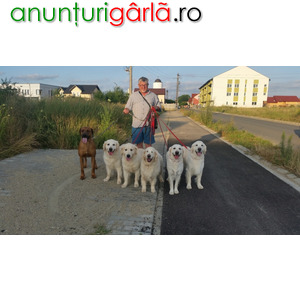 Imagine anunţ Dresaj canin la domiciliul clientului Timisoara