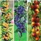 Imagine anunţ Pomi fructiferi columnari si vita de vie