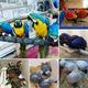 Imagine anunţ 2110/5000 Papagali și ouă de papagal de vânzare în Marea Britanie.